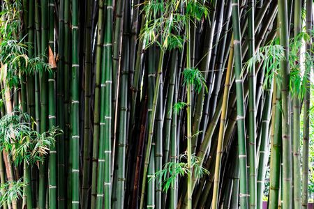 The green bamboo zoom to close up of the stem.