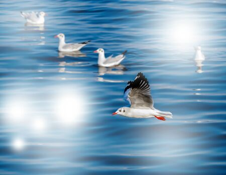 The seagull flying,The surface water with the reflection and sun spot. Standard-Bild