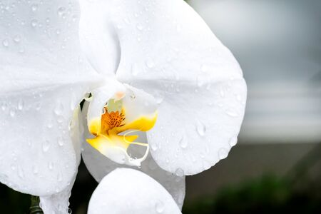 Close up the bloom flower and droplet in rainy season. Standard-Bild