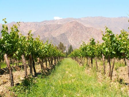 Winery in Cafayate, northern Argentina photo