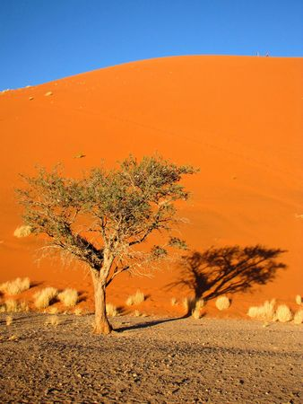 Orange sand dune on Namibian desert photo