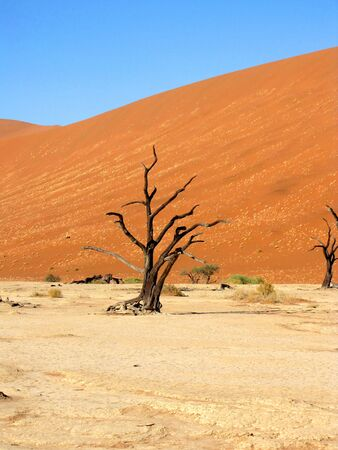 Dead Valley in Sossusvlei, Namibia photo