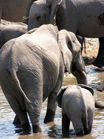 waterhole: Elephants  at waterhole in Etosha National Park, Namibia