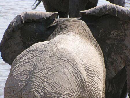 pozo de agua: Elefante en el pozo de agua en el Parque Nacional de Etosha, Namibia