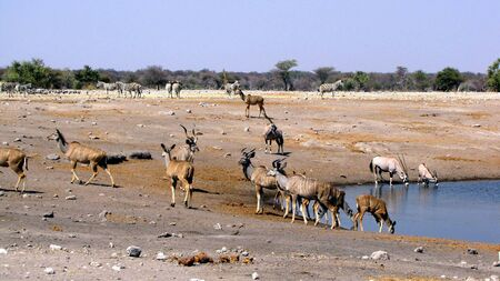 waterhole: Animals at waterhole Etosha National Park, Namibia