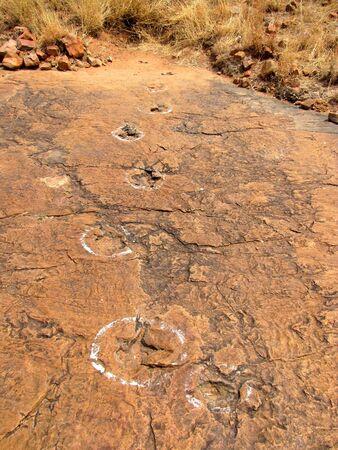 impressed: Dinosaur footprints impressed on the rock, Namibia