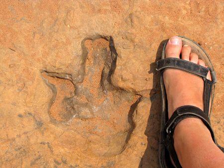 impressed: Dinosaur footprint impressed on the rock, Namibia Stock Photo