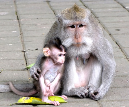 Monkey mother and child sitting toghether  photo