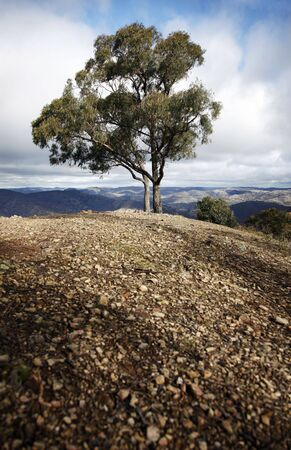 Single Tree, Blue Mountains, Nature of Country New South Wales, Australia Stock Photo