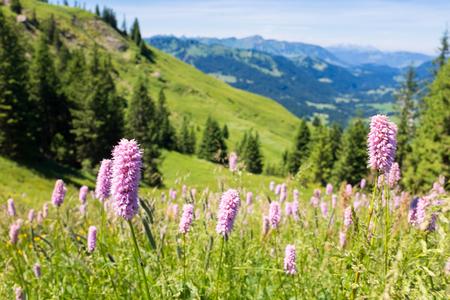 Beierse Alpen met bergmening en weiden in Allgau Stockfoto - 86029541