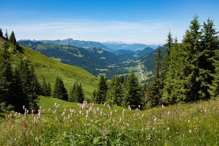 Beierse Alpen met bergmening en weiden in Allgau Stockfoto - 86029542