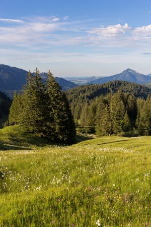 Beierse Alpen met bergmening en weiden in Allgau