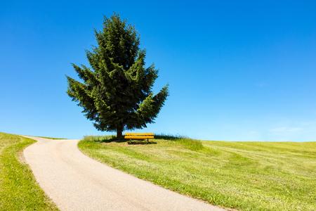 Kronkelende weg leidt naar een boom en een bank in de verte, Zwarte Woud, Duitsland Stockfoto - 86029577