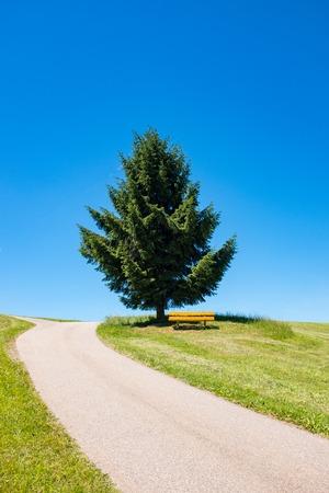 Kronkelende weg leidt naar een boom en een bank in de verte, Zwarte Woud, Duitsland Stockfoto