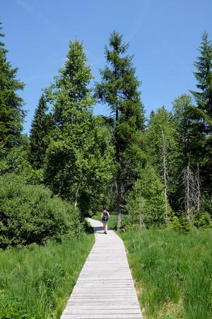 vrouw wandelingen parcours in het Zwarte Woud, Duitsland
