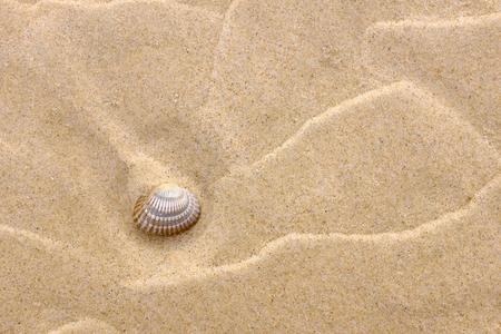 Achtergrond met geel zand en een schaal Stockfoto - 87298284