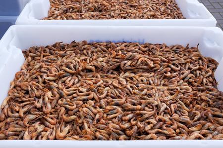 Garnalen achtergrondstructuur. Veel zeegarnalen of patronen van krill. Zeevoedsel zoals garnalen of krill.