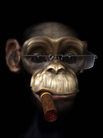 De heer chimpansee de pooier