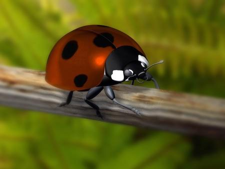 ladybird Stock Photo - 10480921