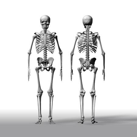 human anatomy Standard-Bild