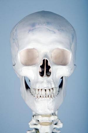 aas: skull human anatomy