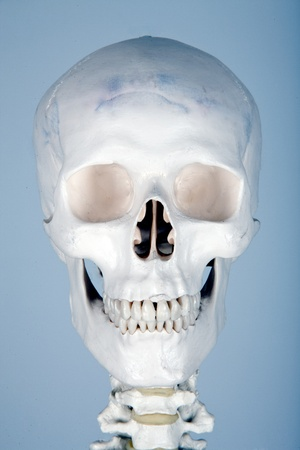 eyes cave: skull human anatomy