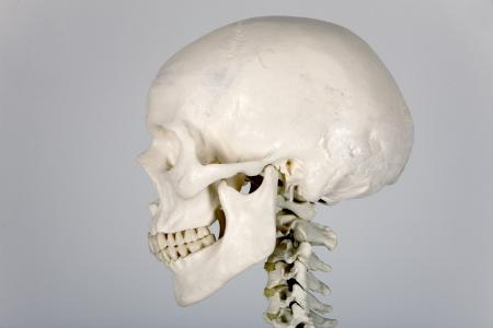 skull human anatomy