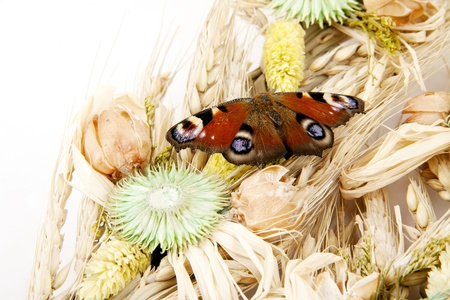 sustainably: wheat with butterfly Stock Photo