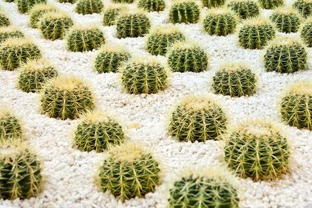 biotope: cactus