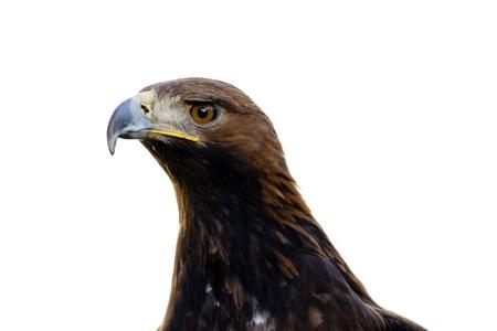 lurk: eagle