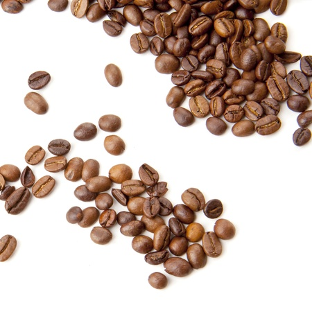 coffee harvest: coffee bean