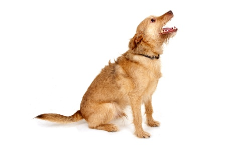 likable: cute dog Stock Photo