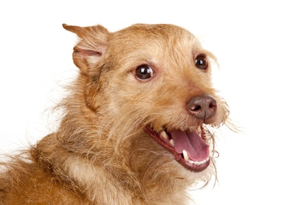 likeable: Cute dog