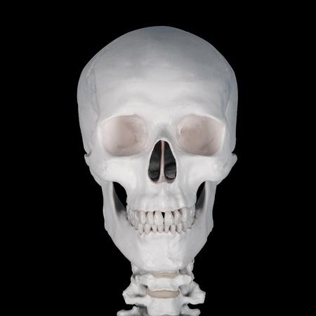 skull head photo