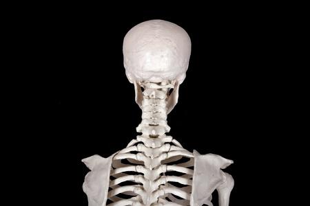 neck back of the head black backround photo