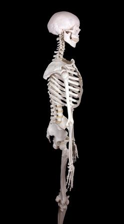 carcasse: carcasse en regardant droit noir backround