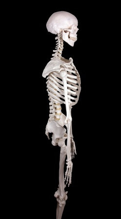carcass: karkas te kijken rechts-zwart backround