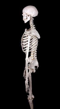 scheletro umano: carcassa a guardare a sinistra-black backround Archivio Fotografico
