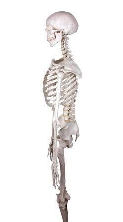 carcasse: carcasse de regarder quitt� backround blanc Banque d'images