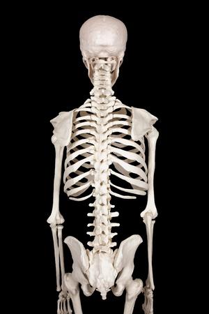spine black backround Stock Photo - 10818149
