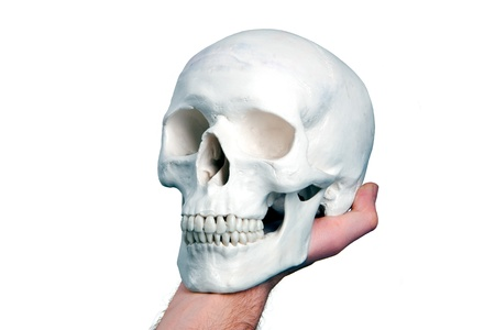 hamlet: hamlet skull Stock Photo