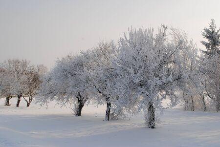 winter garden: Winter Garden  Stock Photo