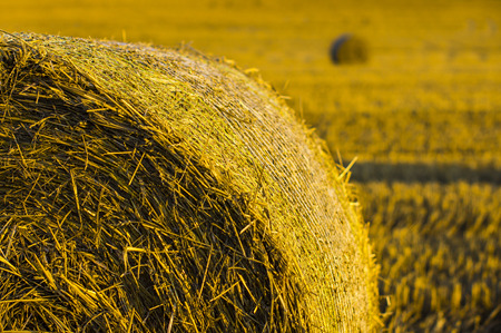 part of a bale of hay in the foreground on golden field in background at harvest time photo