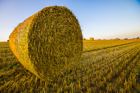 bale of hay in the foreground at harvest time on golden field with blue sky photo