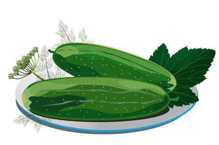 pickles: Illustration of pickles with fennel on a plate
