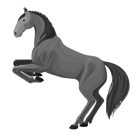 rearing: illustration of rearing horse. Isolated monochrome detailed picture of beautiful animal on white Illustration