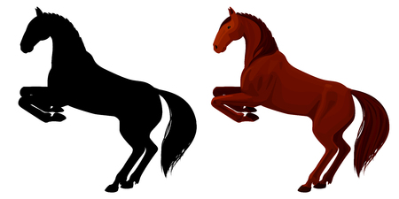 rearing: illustration of chestnut rearing horse. Isolated detailed picture of beautiful animal and its silhouette on .