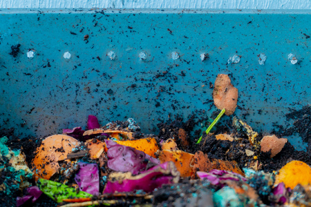 Worm vermiculture compost with rotting food scraps for gardening hobby, making natural fertilizer for plants Stock Photo