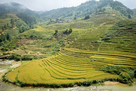 Rice fields on terraced of Sapa, Sapa District, Lao Cai Province,  Northwest Vietnam Stock Photo