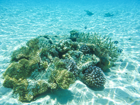 Underwater view with wonderful and beautiful corals and tropical fish at Maldives Stock Photo